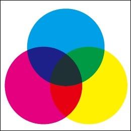 カラーを楽しむ