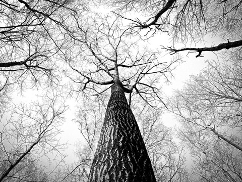 幹が太くなった日